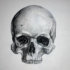 photos pencil drawing skull images drawings gallery