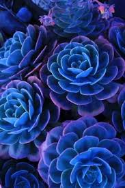 blue and purple flowers beautiful blue and purple flowers 3 escape in nature