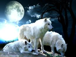 full wolf moon 15th january wolf moon wolf and dog
