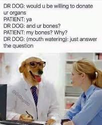 Dog Doctor Meme - entertaining pictures dr dog and f ck that alligator hilarious