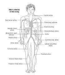 arteries of the body diagram patient