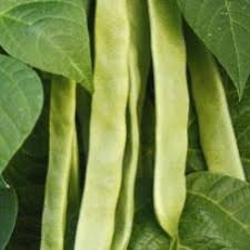 Types Of Garden Beans - organic italian snap pole bean seeds seeds of change garden