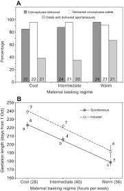 maternal basking regime has complex implications for birthdate and