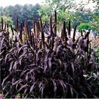 products rcop clesen s ornamental plants