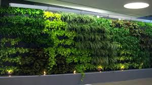 Vertical Indoor Garden by Vertical Wall Garden Stunning Indoor Office Space 72andsunny