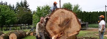 tree removal portland tree services portland arborist portland