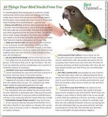 vital l full spectrum light for birds 286 best baby birds images on pinterest parrots budgies and parakeets
