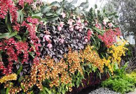 18 indoor orchid garden tropical living wall design watering