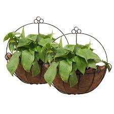 planters that hang on the wall amazon com mintcraft wall mount planter coco 14