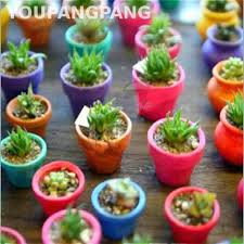 100 pcs mixed mini cactus seeds multifarious ornamental plants