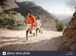 australian shepherd ultra marathon running chihuahua stock photos u0026 running chihuahua stock images
