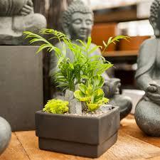 succulent zen garden garden indoor plants floral succulents