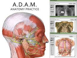 Human Anatomy Exam Questions A D A M Anatomy Practice Online Student