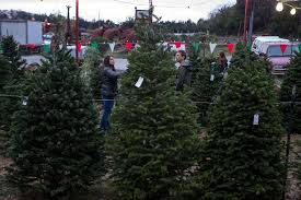 christmas tree prices a christmas tree shortage is driving higher prices at lots this year
