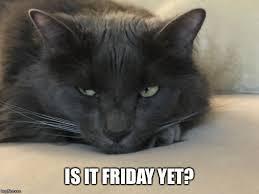 Depressed Cat Meme - depressed cat memes imgflip