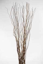 curly willow branches curly willow branches 36 40in 11 branches curly willow