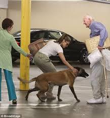 belgian malinois jet black eva mendes keeps her guard dog hugo close but the excitable canine