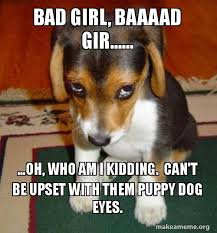 Puppy Eyes Meme - bad girl baaaad gir oh who am i kidding can t be upset