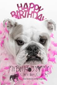 card 19 bulldog birthday greeting card card