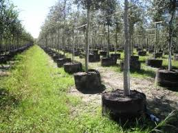 healthy garden root smart pot about us