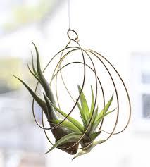 brass coil air plant ornament home decor lighting elaine b