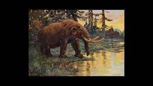 what killed the great beasts of north america science aaas