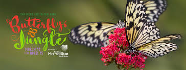 butterfly jungle 2018 san diego zoo safari park