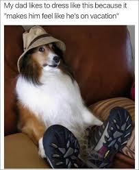 australian shepherd meme 30 good and nice dog memes u2013 pleated jeans