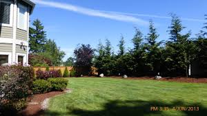 Backyard Landscaping Ideas For Privacy by Privacy Trees For Small Yards Strigenz Back Yard Looking East
