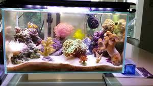 fluval edge marine light fluval edge 6 gallon nano saltwater reef fish tank fully packed