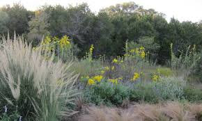 native plant guide what is texas native plant week texas native plant week