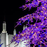 mormon temple festival of lights festival of lights 2016 hawke photography
