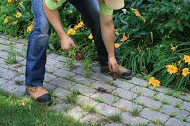 Type Of Grass For Garden How To Remove Weeds From Your Paving Stones And Install Envirosand