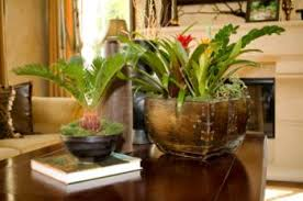 Tropical Plants Pictures - exotic house plants pictures