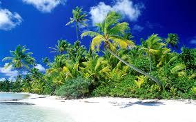 beautiful beach trees hd wallpaper hd wallpapers