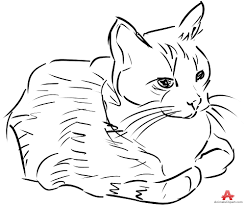 drawing sketch of beautiful cat free clipart design download