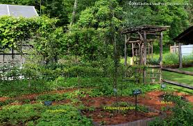 a compact fruitful garden plan stella otto the backyard