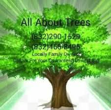 all about trees landscape company splendora 13 reviews