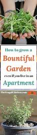 best 25 apartment gardening ideas on pinterest apartment plants