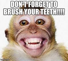 Brushing Teeth Meme - monkey smile imgflip