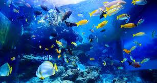 okinawa churaumi aquarium for the next generation to inherit