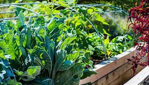 how to grow a successful vegetable garden the home depot canada