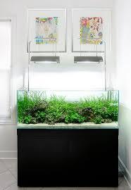 designer aquarium best 25 aquarium design ideas on aquarium amazing