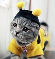 Halloween Costumes Cat 30 Cutest Halloween Costumes Cats Halloween Costumes