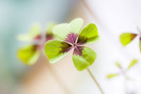 free images nature forest blossom flower petal green