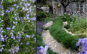 buy chef s choice rosemary for sale from wilson bros gardens