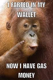 Monkey Meme - monkey s logic memes lol
