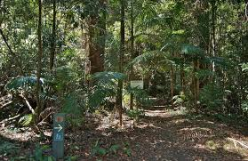 native plants nsw coachwood australian native plants nsw national parks