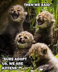 Animal Meme - my funny animal memes the real sasha