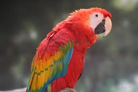 parrot home decor parrot home decor home design and idea
